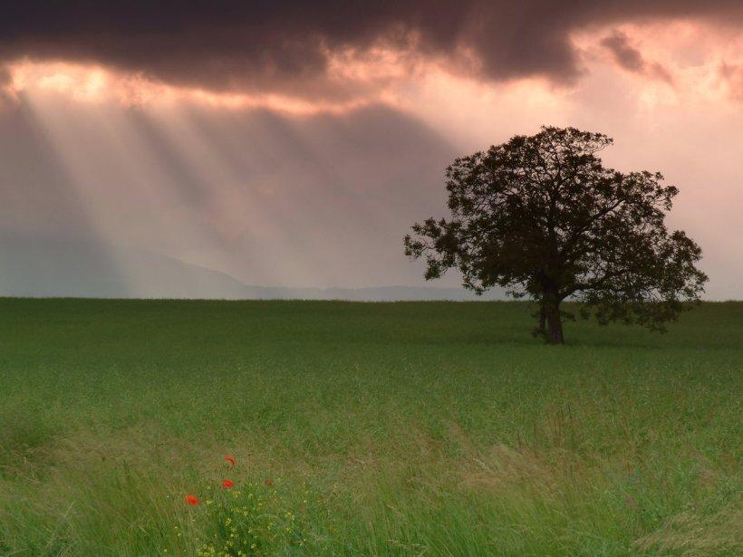 Edenpics-com_005-065-Silhouette-d-un-arbre-dans-un-champ-avec-rayons-de-soleil-en-arriere-plan-et